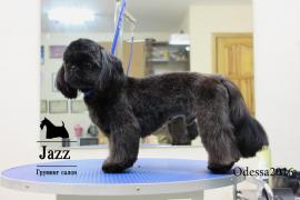 Dog grooming in Odessa. Grooming salon jazz