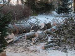 Спил дерева. Выкорчевать пень. Обрезать сад