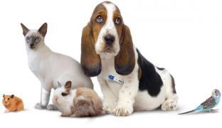 Ветеринарная помощь, вызов ветврача Днепр, Ветеринар вет. услуги