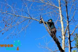 Вырубка кустарников. Корчевание, удаление деревьев